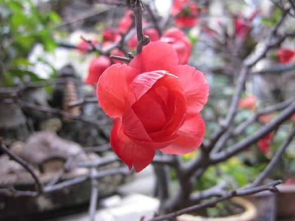 hoa 4