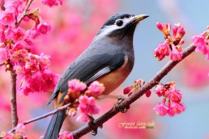 chim and hoa xuan