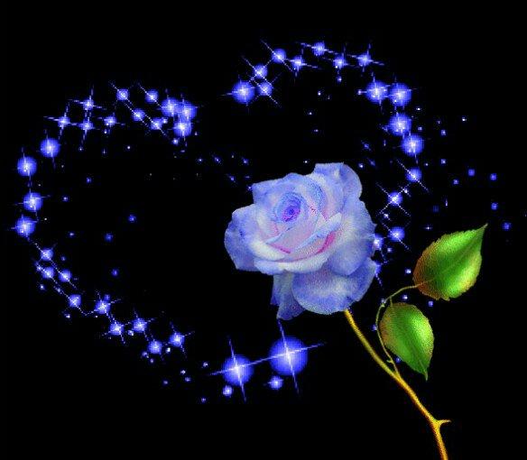 HOA ROSE LOVE