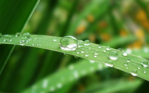 Dew Photographs 4