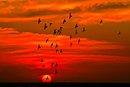 chim bay