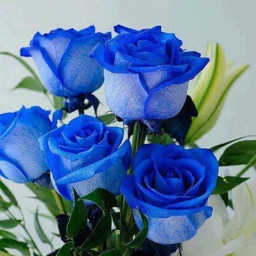 hoa hong xanh