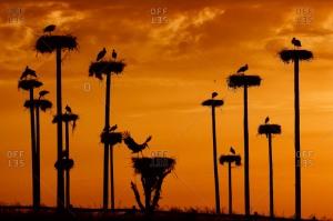chim sunset